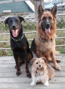 Moka, Joy & Odjy